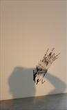 Scribble & Shadow (MA Show 2013) by Jenny George, Photography